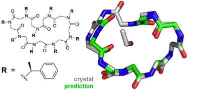 predicted and crystal structures of peptoid nonamer